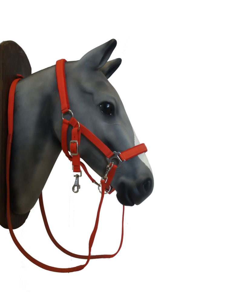 Bridle- Halter with reins